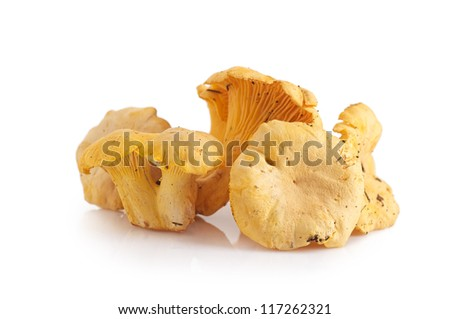Isolated yellow chanterelle