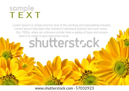 Isolated yellow flowers with copy space #57032923