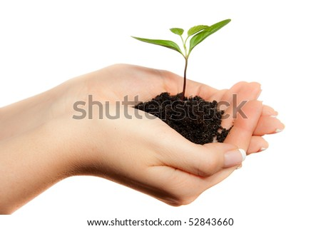 Isolated young plant in woman hands