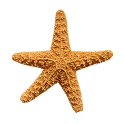 Isolation Of A Starfish With Clipping Path