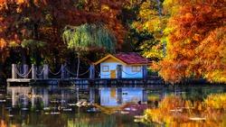 Istanbul-Turkey: Autumn forest trees scene in Ataturk Arboretum.