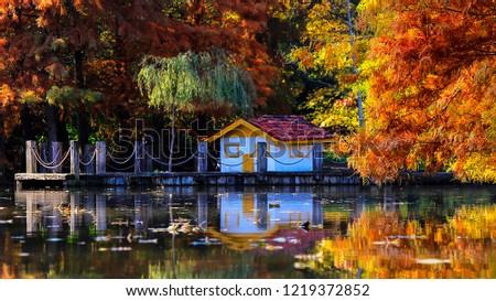 Istanbul-Turkey: Autumn forest trees scene in Ataturk Arboretum.