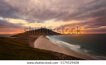 Isthmus of the Neck on Saunders Island at sunset, Falkland Islands; home to multiple colonies of Gentoo Penguins (Pygoscelis papua) and other wildlife. #1174529608