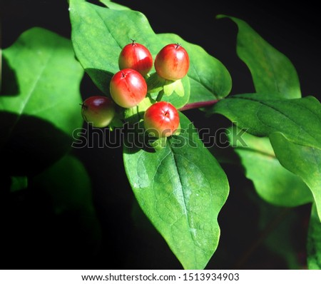 It bears an edible juicy fruit called apeachor anectarine #1513934903