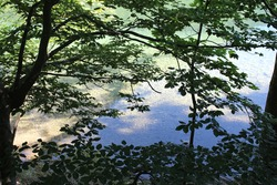 It is a forest with lakes and trees.