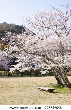 It is a Japanese cherry tree that blooms in spring. Small pink flowers are in bloom and they are very beautiful. #1278659548