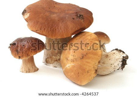 It is a lot of ceps on a white background