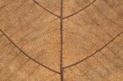 It is Dry leaf texture for pattern.