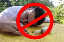 It is forbidden to eat poisonous mushrooms. prohibition sign. on a yellow table lies a poisonous mushroom and an adult unconscious man with his eyes closed, poisoning, summer sunny day. close-up.