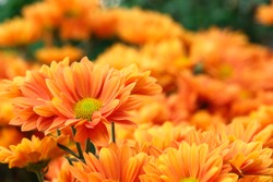 It is Orange flowers with orange background.