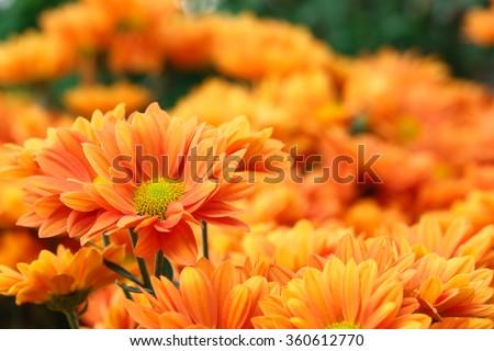It is Orange flowers with orange background.