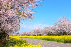 It is spring scenery of