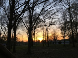 It's a beautiful picture of the sunset through some trees in the small town of Raymond ms