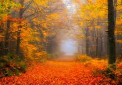 It's autumn time. Colorful leaves on the trees. Colorful leaves fallen to the ground. Autumn mood. Uludag National Park, Bursa.