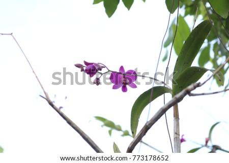 it's orchidaceae   orchid