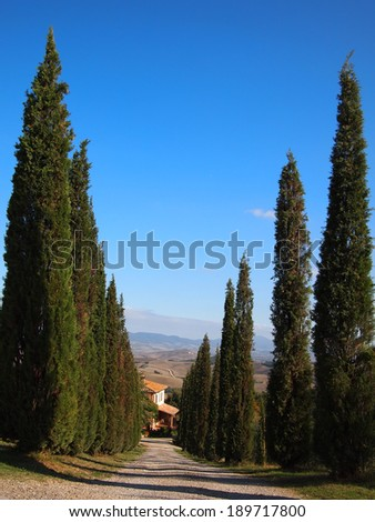 Italian access route lined by cypress trees with Tuscany background.