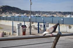 Italian city dock with pigeon wallpaper industry pier bird