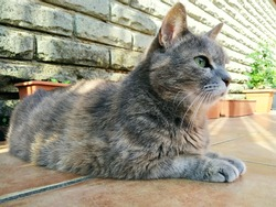 Italian furry cat lay down on the terrace in the morning.
