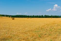 Italian Landscape with Many Hay Bales