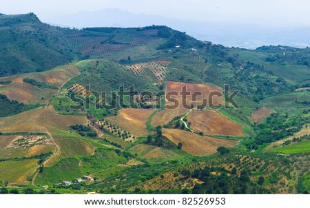 Italian landscape with vineyards