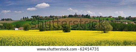 Italian landscape with yellow flowers