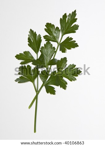 Italian parsley isolated on white with space for text