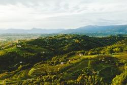 Italian vineyard hills countryside at sunset, Savorgnano del Torre, Udine Province, Friuli Venezia Giulia, Italy