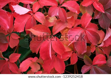 Italy, countryside, autumn leaves in a garden #1239252418
