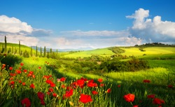 italy countryside landscape with red poppy flowers and cypress trees on the  mountain path