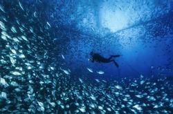 Italy, Sicily, Mediterranean sea, Ponza Island, aquaculture nets off the coast of the island - FILM SCAN