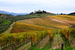 Italy. Tuscany. Greve in Chianti. Chianti vineyards, wine grapes growing.