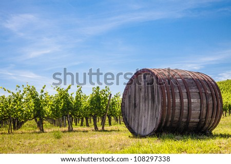 Italy, Tuscany region,  Chianti area. Chianti wineyard during a sunny day of summer - stock photo