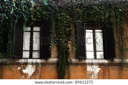 Ivy and two windows, Rome, Italy