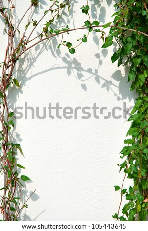 Ivy Frame and White Wall