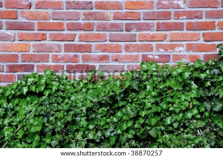 Ivy grows on brick wall, room for text, background