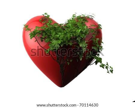 ivy heart - stock photo
