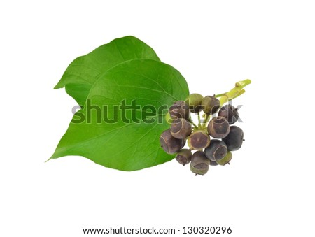 Ivy Leaves and Berries