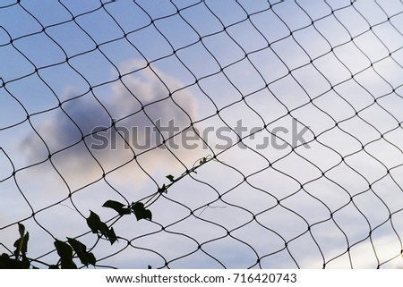 Ivy on the rope mesh fence with the sky background #716420743