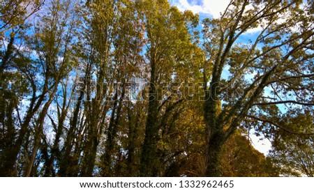 Ivy Trees - Fall Trees - Green Trees #1332962465
