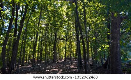 Ivy Trees - Fall Trees - Green Trees #1332962468