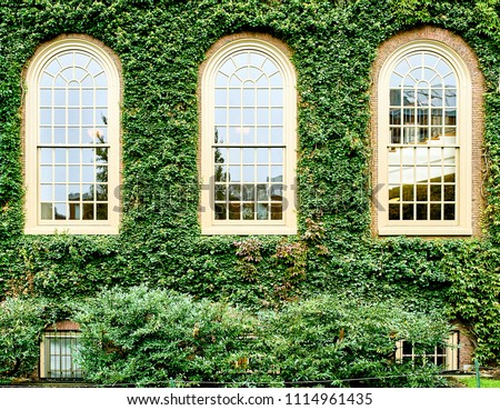 Ivy wall in Harvard at Cambridge, Massachusetts, USA. #1114961435
