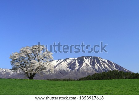 Iwate and cherry blossoms #1353917618