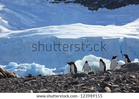 Jachass Penguins Antarctica