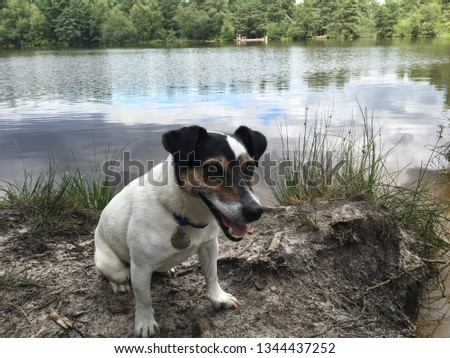 Jack Russel by lake #1344437252