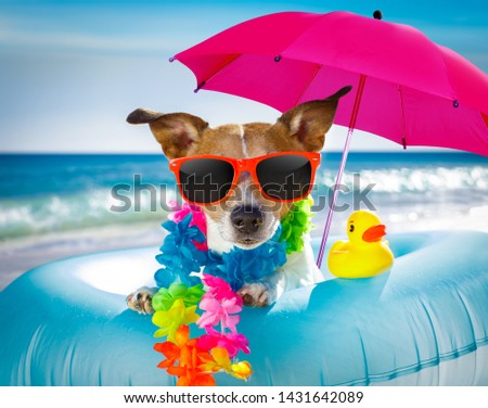 jack russel dog resting and relaxing on a air mattress or swim ring   at the beach ocean shore, on summer vacation holidays #1431642089