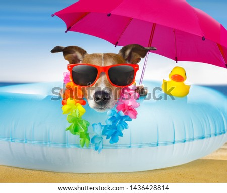 jack russel dog resting and relaxing on a air mattress or swim ring   at the beach ocean shore, on summer vacation holidays #1436428814