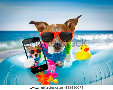 jack russel dog resting and relaxing on a air mattress or swim ring   at the beach ocean shore, on summer vacation holidays taking a selfie with smartphone or mobile phone #633650096