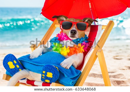 jack russel dog resting and relaxing on a hammock or beach chair under umbrella at the beach ocean shore, on summer vacation holidays #633648068