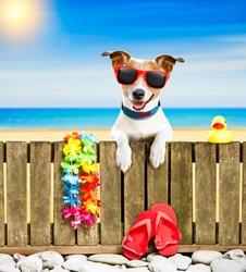 jack russel dog resting and relaxing on a wall or fence at the  beach  ocean shore, on summer vacation holidays, wearing sunglasses