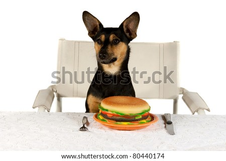 Jack Russel Terrier at Table